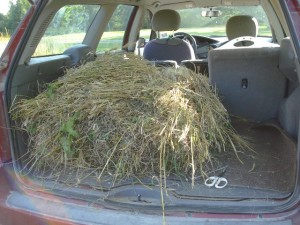 Barley straw gathered and loaded in the car.