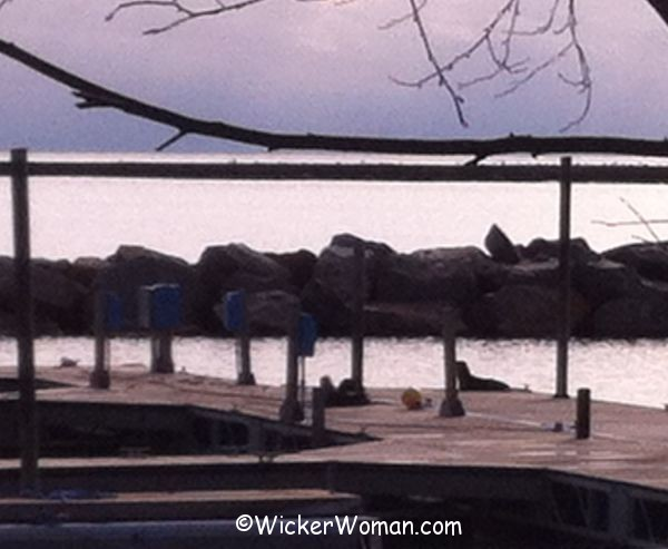 Grand Marais MN otters