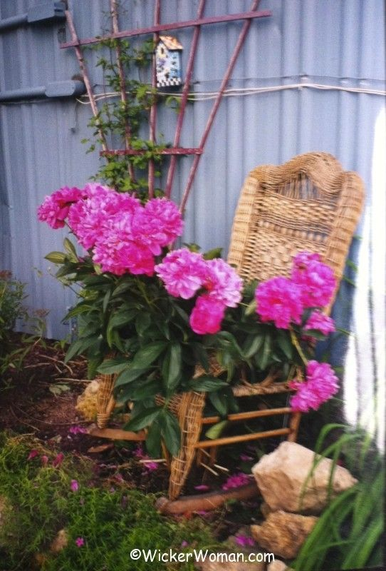 wicker rocker plant support