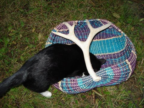 Cat in an Antler Basket