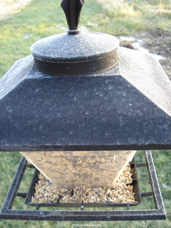 Bird feeders frosty this May morning!
