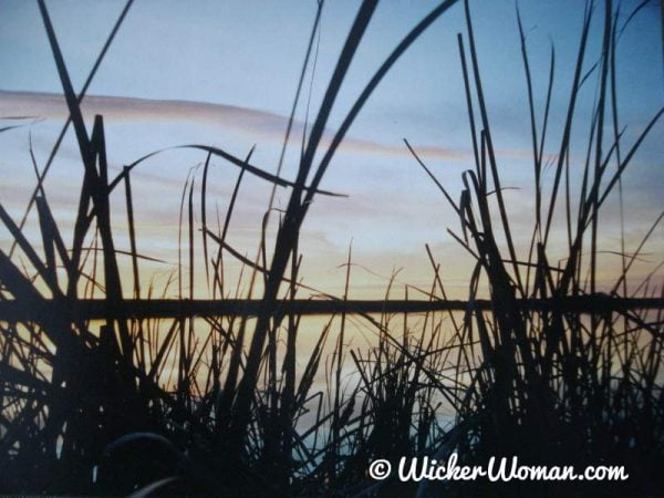 cattails in the lake at sunrise