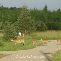 Deer Hunting Season–Keep Safe Babies