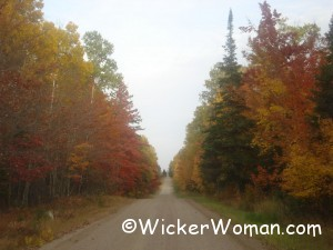 autumn leaf country road