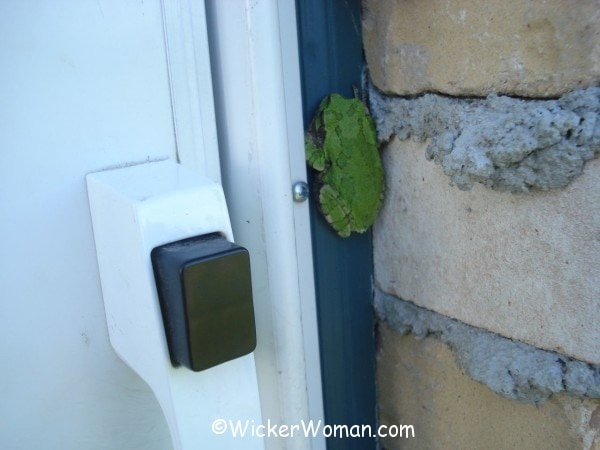 green frog by the door