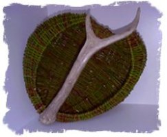 Gathering Willow for Basketmaking