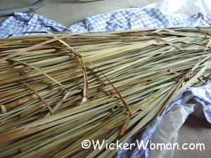 cattail leaves freshly harvested