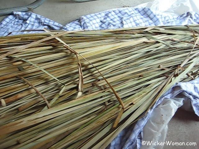 How To Weave A Cattail Basket : How to process cattail leaves for weaving