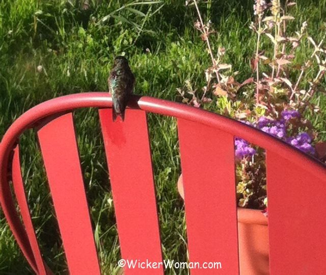 hummingbird chair resting