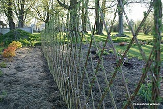 More Live Willow Fences!
