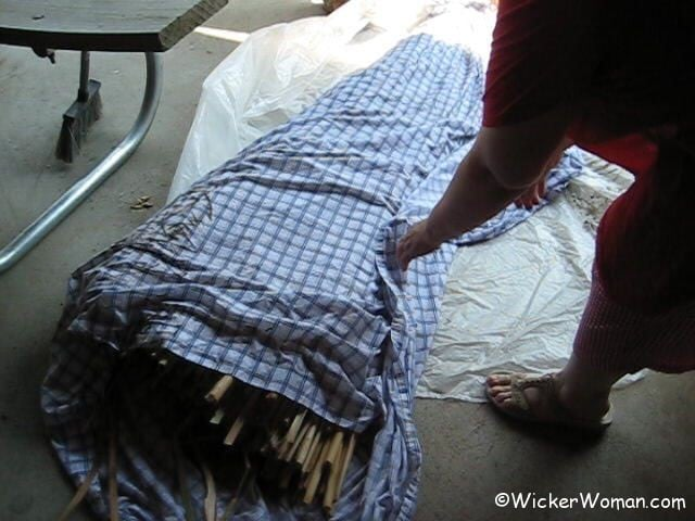 Mellowing dried cattail leaves before weaving chair seats.