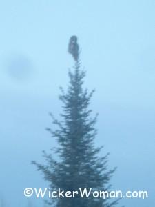 owl treetop 3-1-13