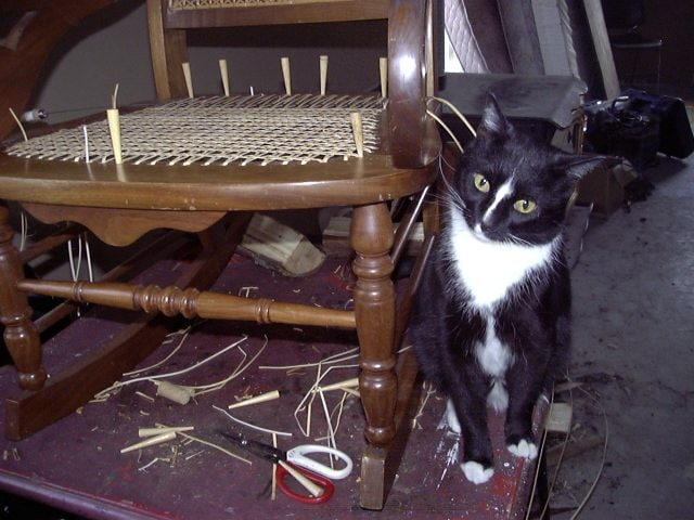 Barbara Brabec's Newsletter features my Shop Cat, Don Gatto!