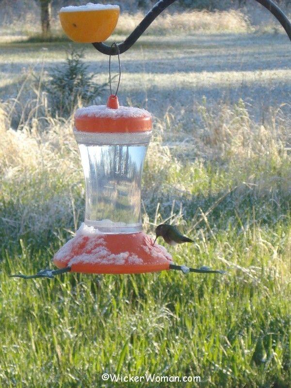 oriole feeder hummingbird snow