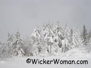 snow5-trees-4-16-2012